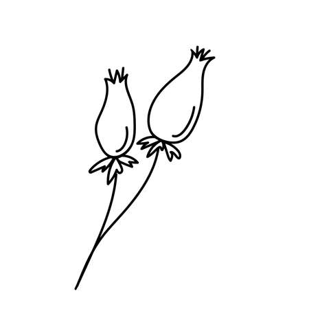 Black outline of rosehip berries on a white background. Vector. Doodling  イラスト・ベクター素材