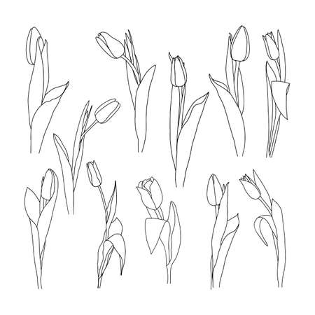 Vector illustration of a tulip. Doodle style.
