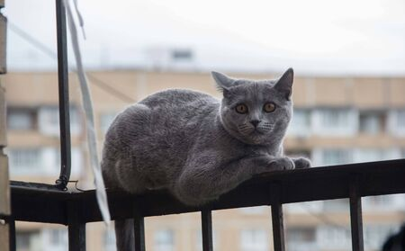frightened and surprised Gray cat looking up with wide-open eyes