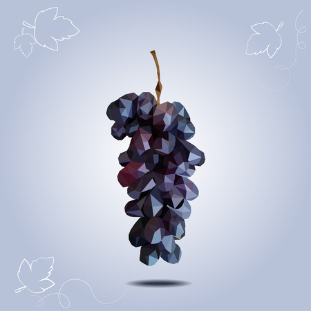 patch of light: Vector polygonal dark grapes on blue background. One branch of grapes. Illustration