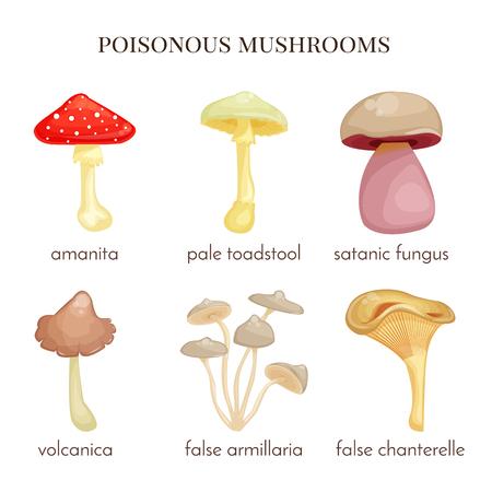 satanic: Set of poisonous mushrooms. Red amanita, isolated false chanterelle, false armillaria, satanic fungus, pale toadstool. Illustration