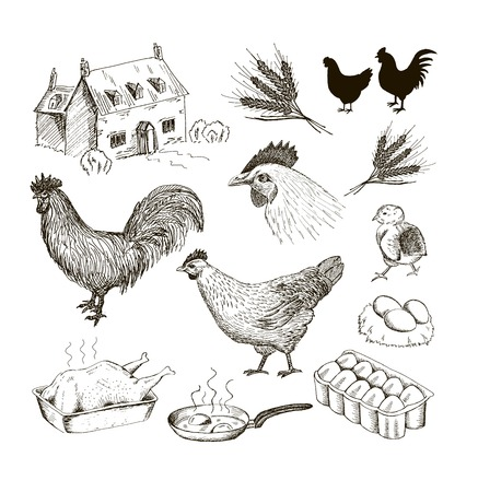 鶏。ベクトルのスケッチのセット