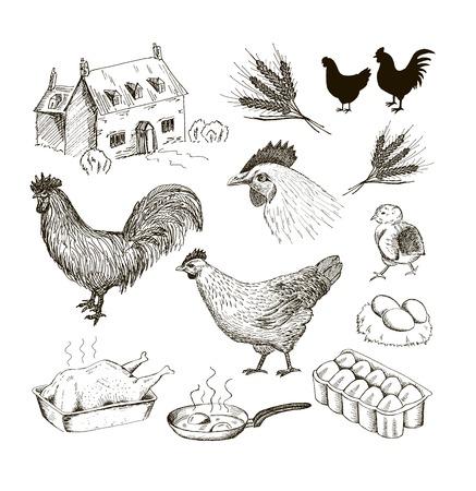 chicken. set of vector sketches
