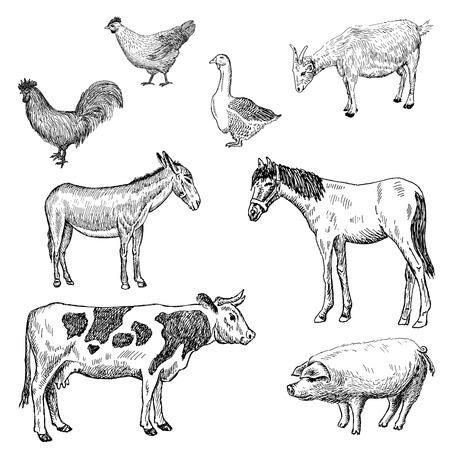burro: animales de granja. Conjunto de dibujos vectoriales