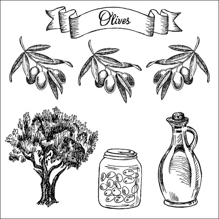 olive tree isolated: olives  set of vector sketches