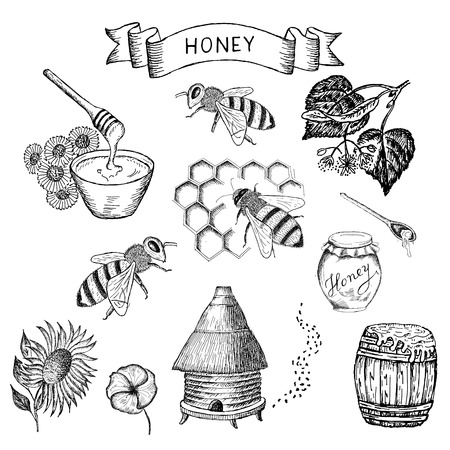 beehive: honey. set of vector sketches Illustration
