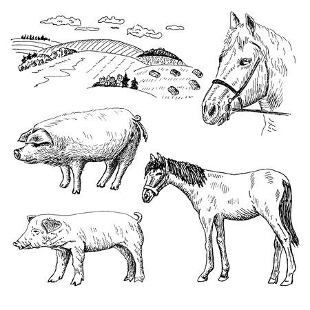 varkens en paarden. set van vector schetsen