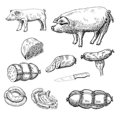 salchicha. Conjunto de dibujos vectoriales Ilustración de vector