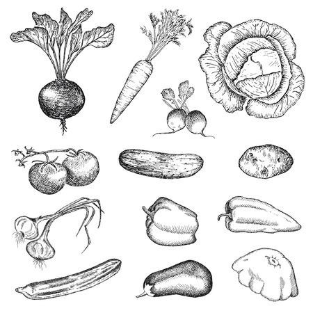 groenten hand tekenen set van vector schetsen