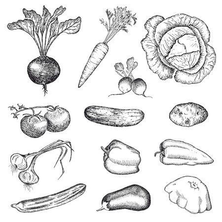 vegetables  hand drawing set of vector sketches