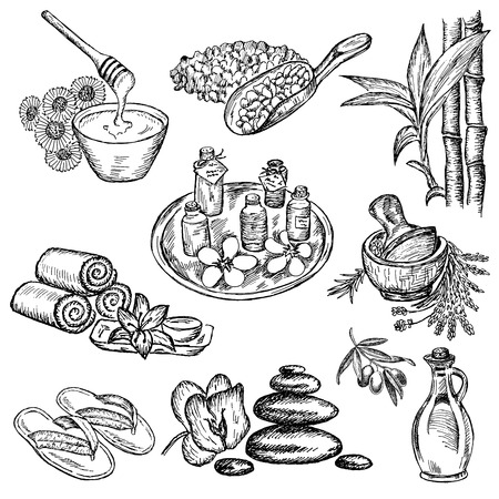 bamboo leaf: SPA  set of vector sketches hand drawn Illustration