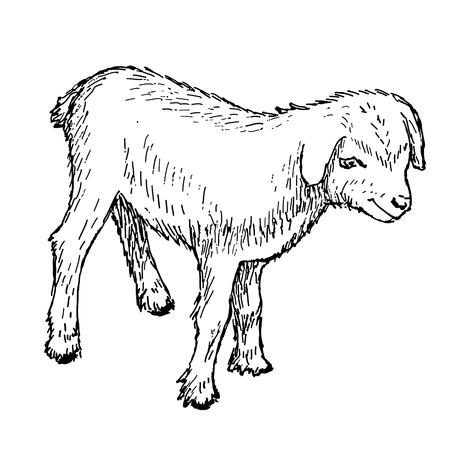 vector illustration of engraving goatling hands drawing Vector