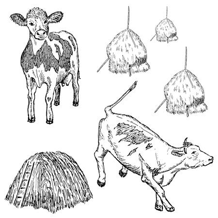 hay: cow set Illustration