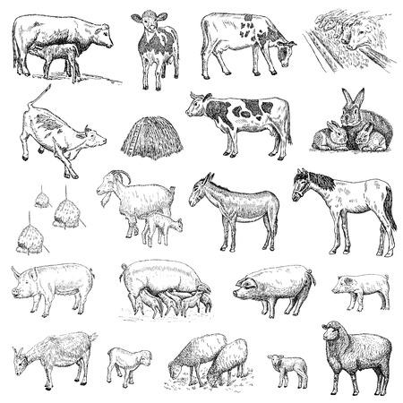 donkey tail: dibujo mam�feros manos Vectores