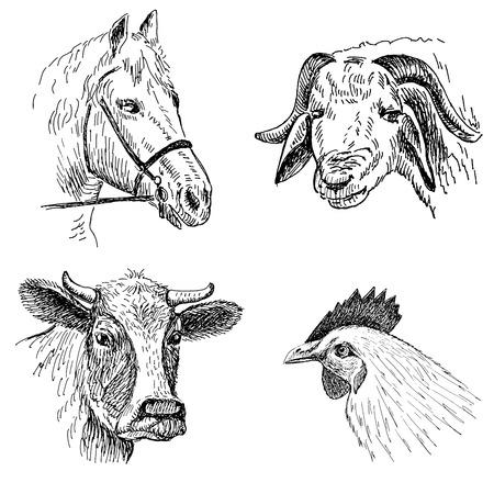 animal faces Stock Vector - 29856495