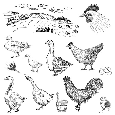 poultry yard 向量圖像