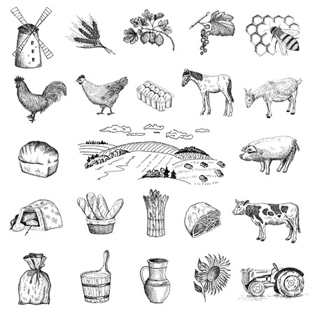 hand drawing: rural economy Illustration