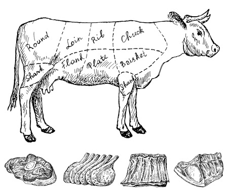beef meat: butchery Illustration