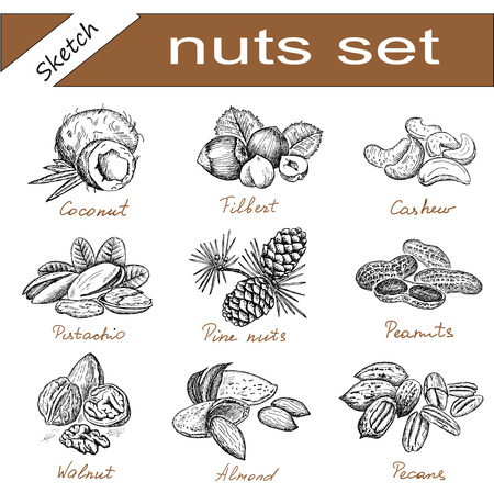 pine nut: nuts set