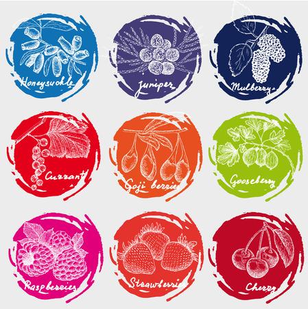 honeysuckle: berries set Illustration