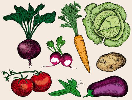 potato plant: vegetables set