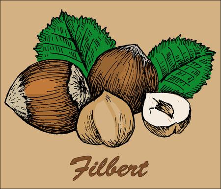 cashew tree: nut filbert