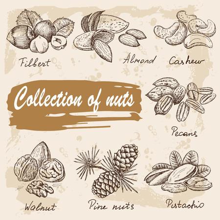 verzamelen van noten Stock Illustratie