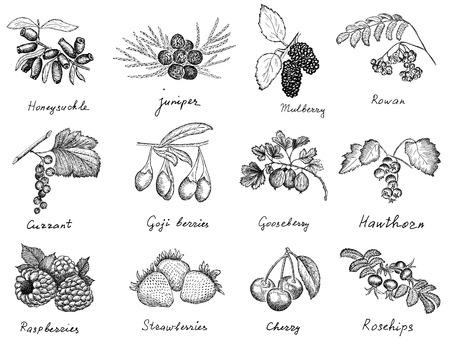 berries set Ilustração