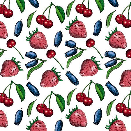 honeysuckle: berries. hand drawing set of vector sketches