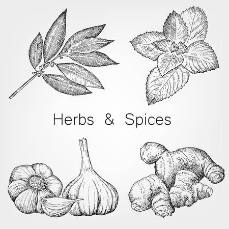 kruiden en specerijen Stock Illustratie
