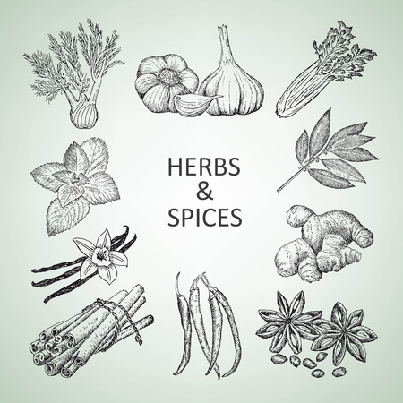 fennel seeds: herbs and spices