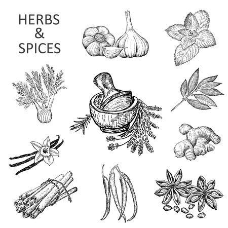 dessin au trait: d'herbes et d'�pices Illustration