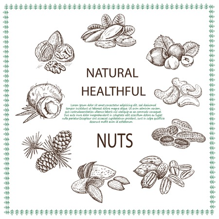 pine nut: almond and assorted nuts. set of vector sketches