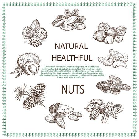 pinoli: mandorle e frutta secca. serie di disegni vettoriali
