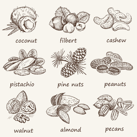 almond: almond and assorted nuts. set of vector sketches