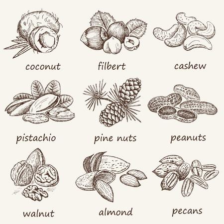 Walnut: hạnh nhân và các loại hạt. tập hợp các bản phác thảo vector