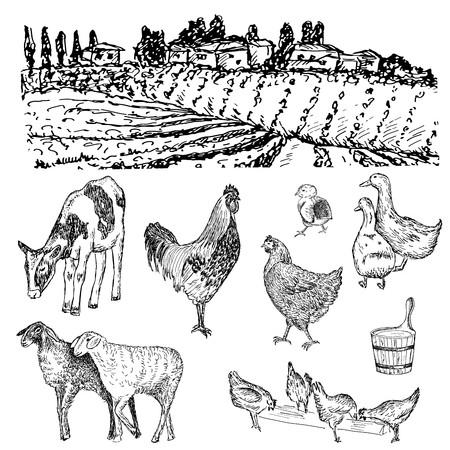 hand illustration: farm, cow, chicken, sheep hand drawn illustration