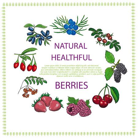 healthful: Natural healthful berries hand drawn vector illustration.