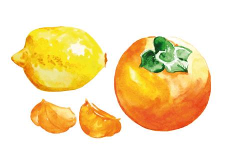persimmon: fruto de la acuarela situado en el fondo blanco. Ilustración colorida.
