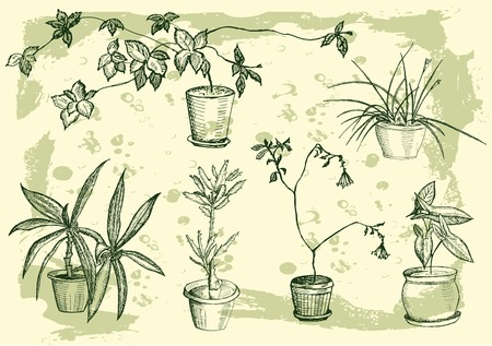 plant in pot: flowers, houseplant, sweet home, hand drawing set of vector sketches