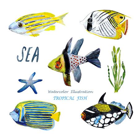 peces: Acuarela de peces tropicales. Pintado a mano ilustración realista.