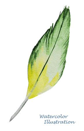 peahen: Watercolor feather on white background. Hand painted realistic illustration. Illustration