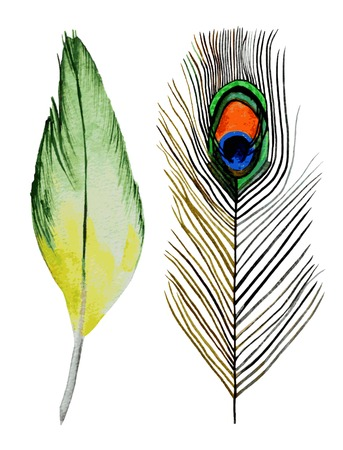 eather: Watercolor feathers on white background. Hand painted realistic illustration. Illustration