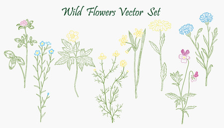 Hand drawn Wild Flowers set of sketches Illustration