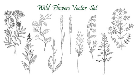 Hand drawn Wild Flowers set of vector sketches. Vintage flowers.