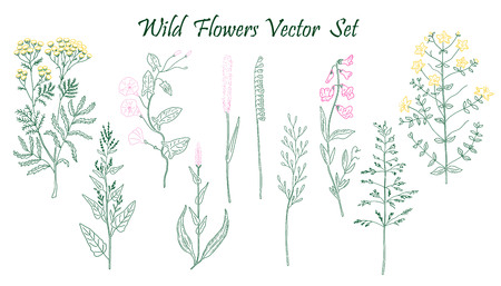 fields of flowers: Hand drawn Wild Flowers set of vector sketches. Vintage flowers.