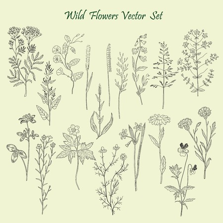Hand drawn Wild Flowers and Grass set of vector sketches. Vintage flowers illustration. Vektorové ilustrace