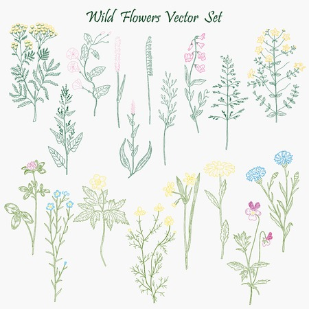 wild grass: Hand drawn Wild Flowers and Grass set of vector sketches. Vintage flowers illustration.