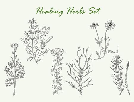 Hand Drawn herbes médicinales ensemble de dessins vectoriels. herbes Vintage illustration.