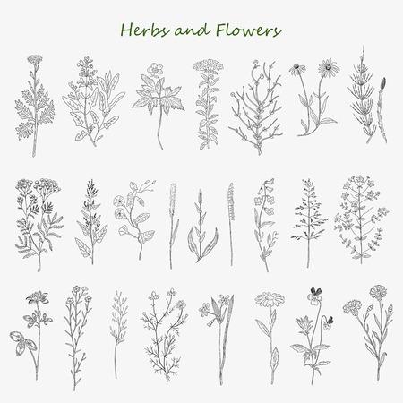 yerbas: hierbas y flores dibujadas a mano conjunto de dibujos vectoriales. Diseño de la vendimia con las hierbas medicinales y flores silvestres ilustración. Vectores